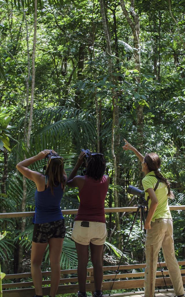 Observation des oiseaux - Caledonia Birds - La Foa