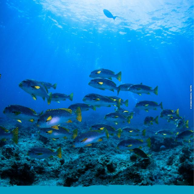 Mobula Diving - Promo SWEET WEEKS