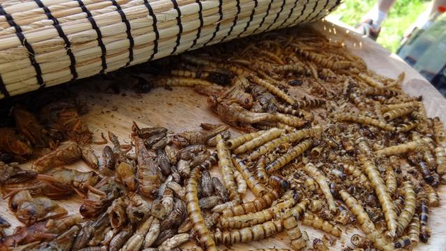 Épreuve des insectes - Lambonésie