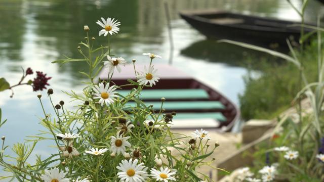 Barque du Marais Poitevin