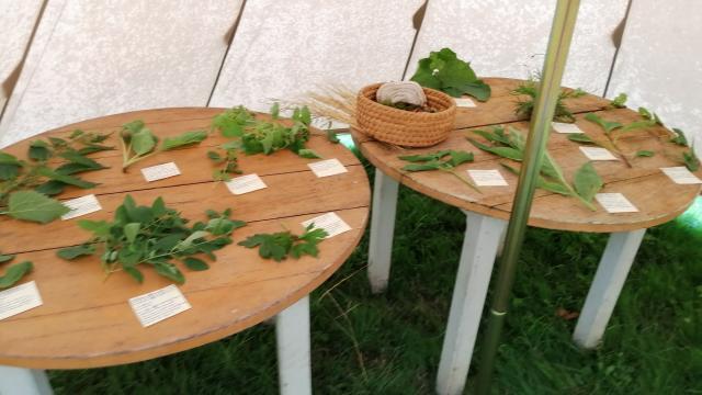 table-et-plantes.jpg