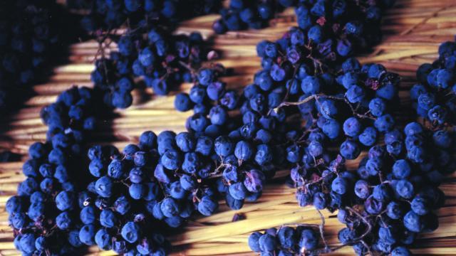 sechage-vin-paill-syndicat-viticole-du-vin-paill-de-la-corrze-corrze-tourisme.jpg