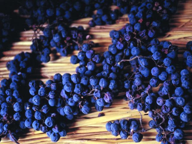 Sechage Vin Paillé © Syndicat Viticole Du Vin Paillé De La Corrèze Corrèze Tourisme