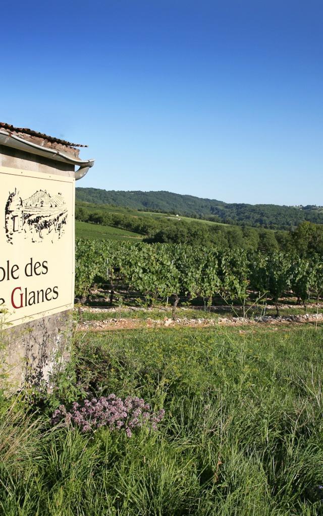 Vignoble De Glanes ® Lot Tourisme J. Morel 3