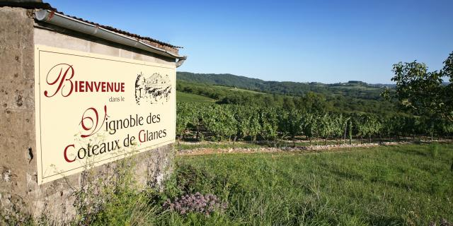 Vignoble De Glanes ® Lot Tourisme J. Morel 3