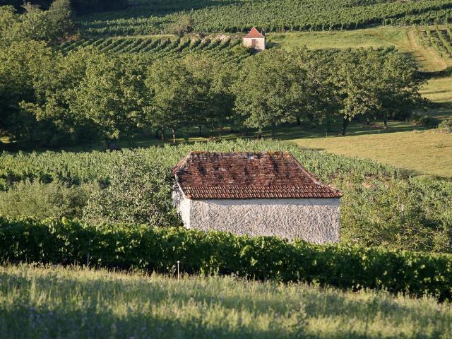 46 Dans Le Vignoble De Glanes ® Lot Tourisme J. Morel 4