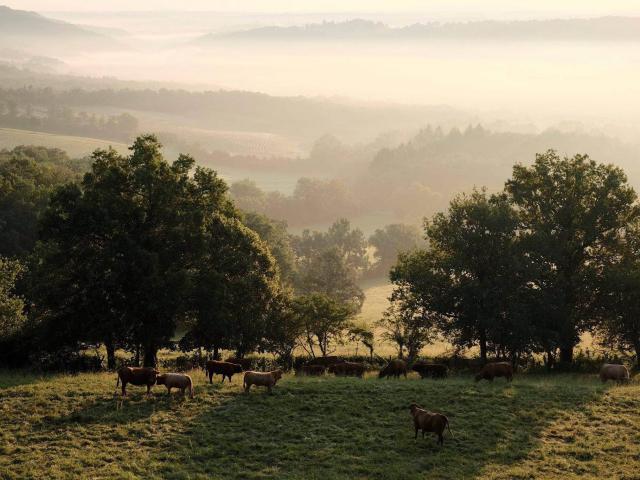 20151124 Campagne Corrézienne Avec Vaches