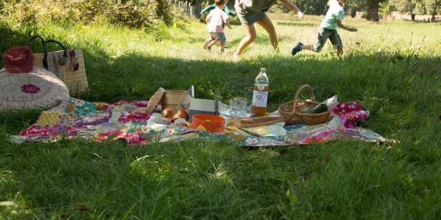 Pique-nique sur l'herbe