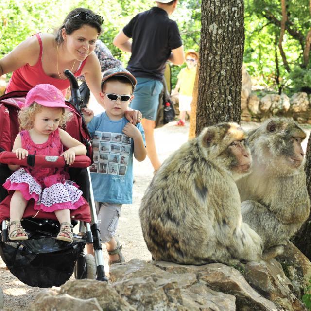 Campgb En Famille Avec Les Singes Rocamadour Otvd Ory4591.jpg