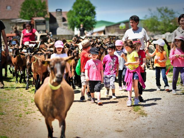Visite Chevrerie Header Cochise.jpg