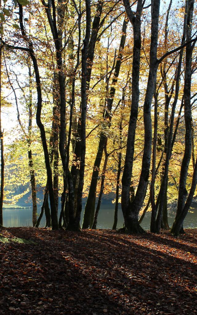 Foret Segalarmouret 0.jpg