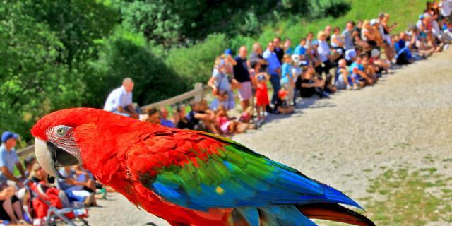 Visite Site Rocher Des Aigles Des Oiseaux Rares .jpg