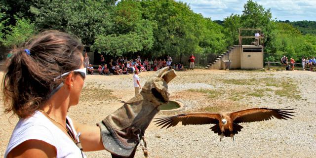 Admirer les vautours du #RocherDesAigles #zoo #Rocamadour 🦅🐣