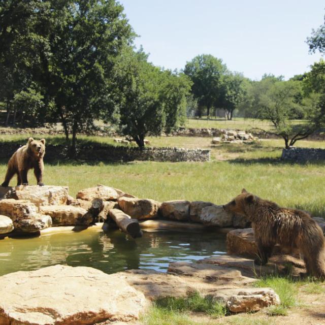 Ours Parc Animalier De Gramat