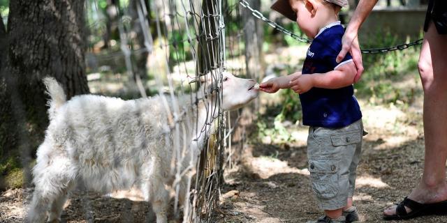 Gramat Parc Animalier 100©otvd Cochise Ory