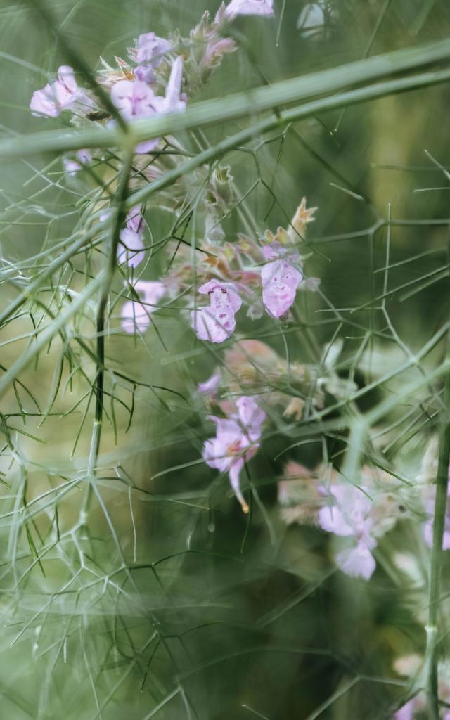 Les Jardins Sothys à Auriac
