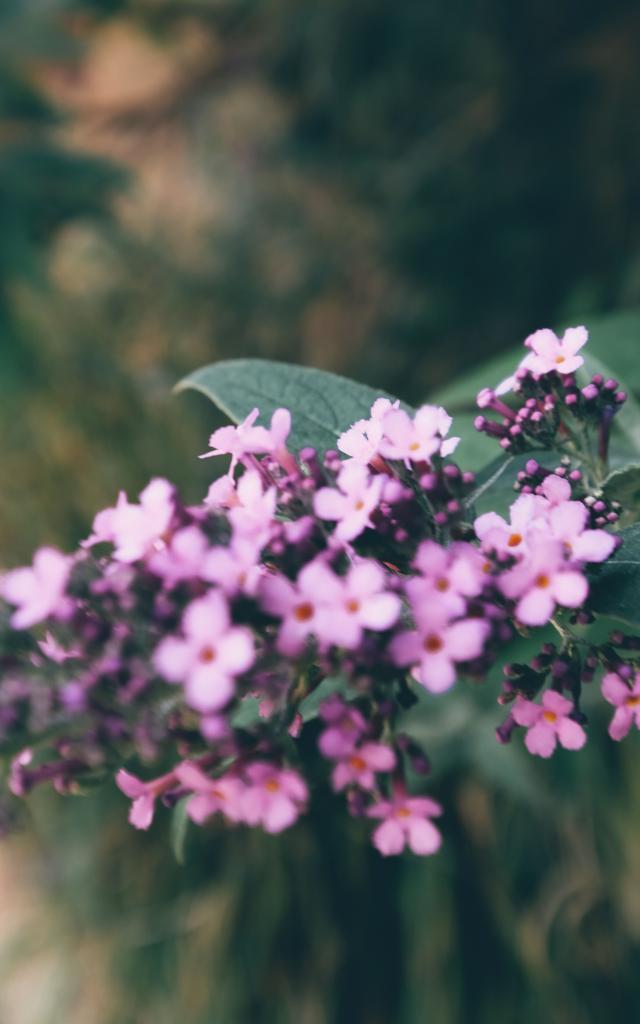 Meyssac fleurs
