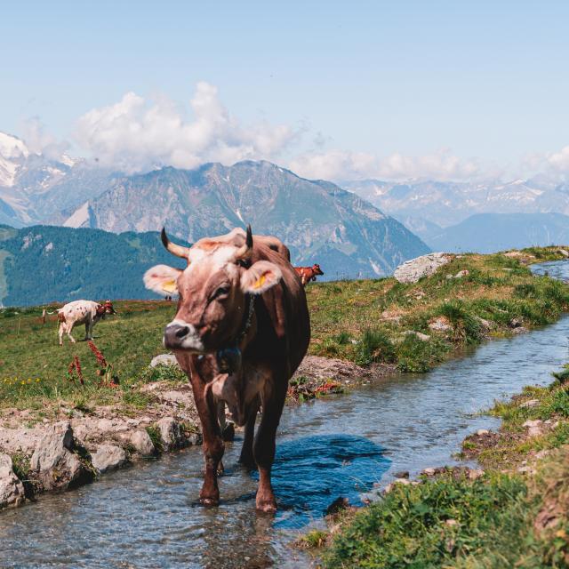 Vache et vue sur les montagnes