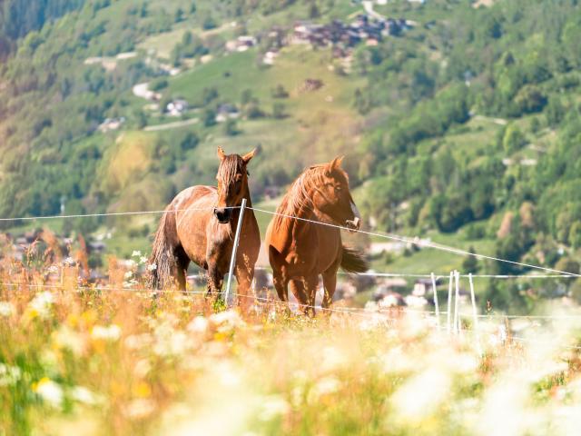 Sports équestres dans la région de Verbier