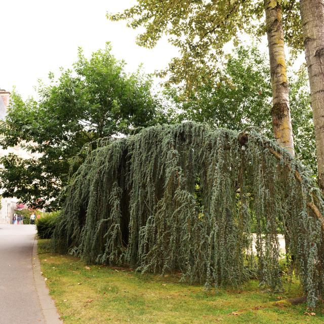 arboretum-bagnoles-orne-2