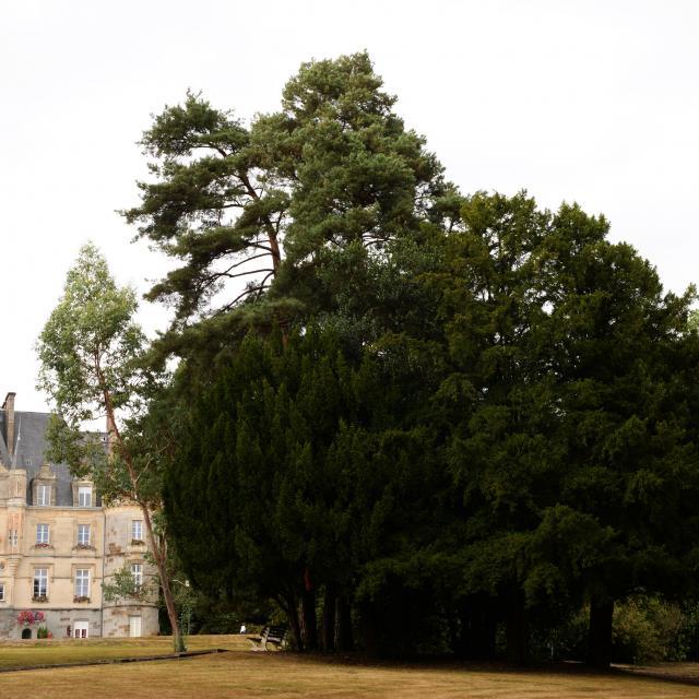 arboretum-bagnoles-orne-3