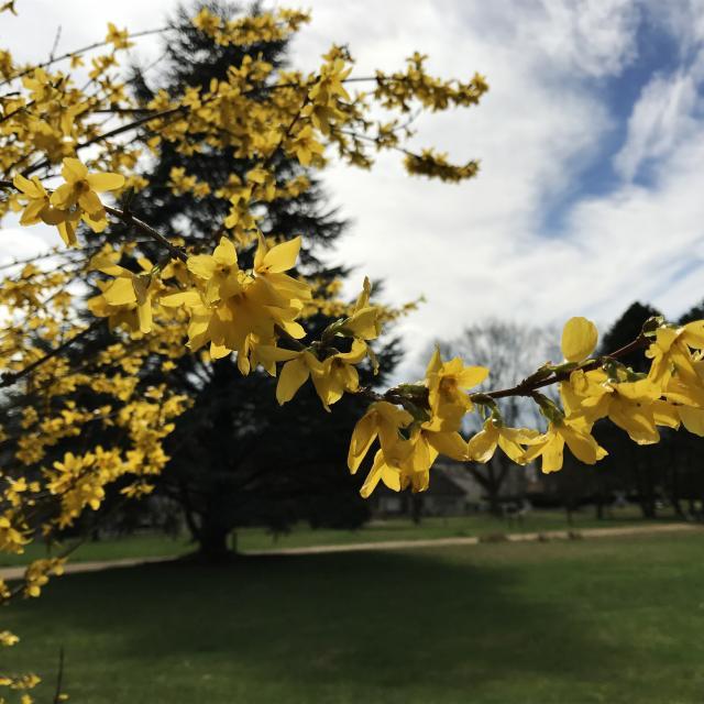 fleurs-arboretum-bagnoles-orne1