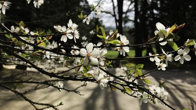 fleurs-arboretum-bagnoles-orne2