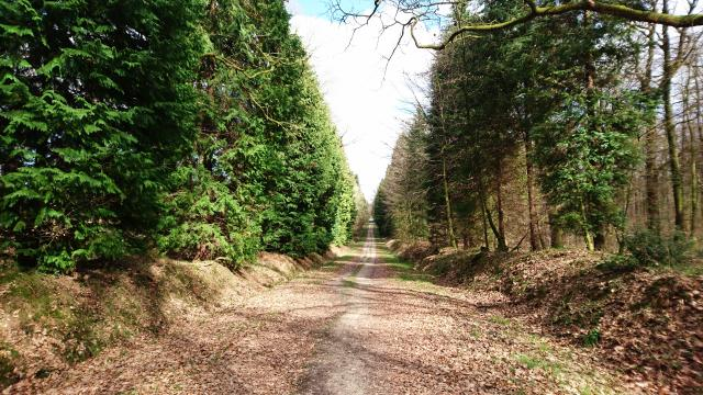bagnoles-orne-foret-andaines-allee-forestiere
