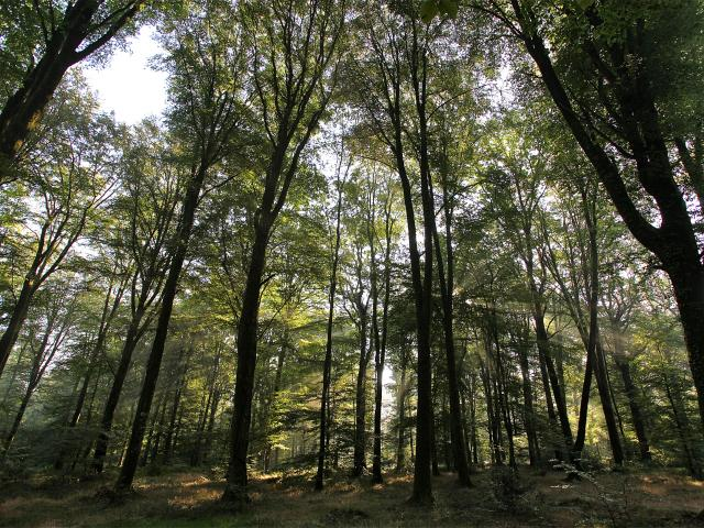 foret-arbre-bagnoles-orne-4