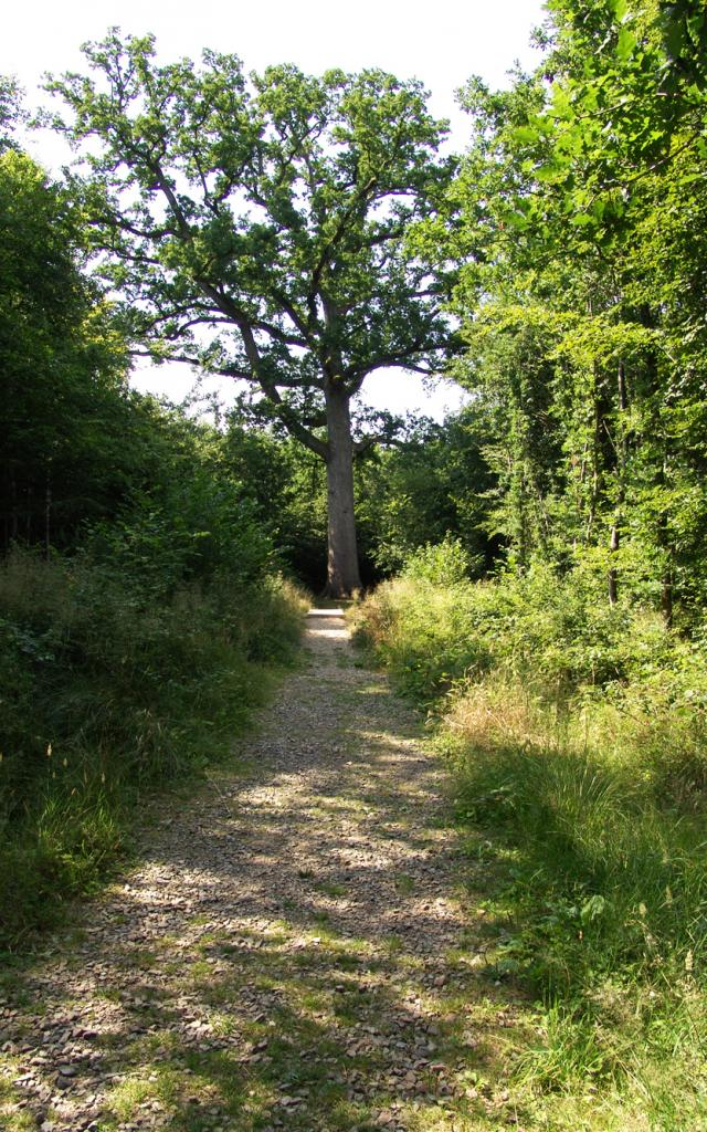 foret-andaines-chene-hippolyte-bagnoles-orne