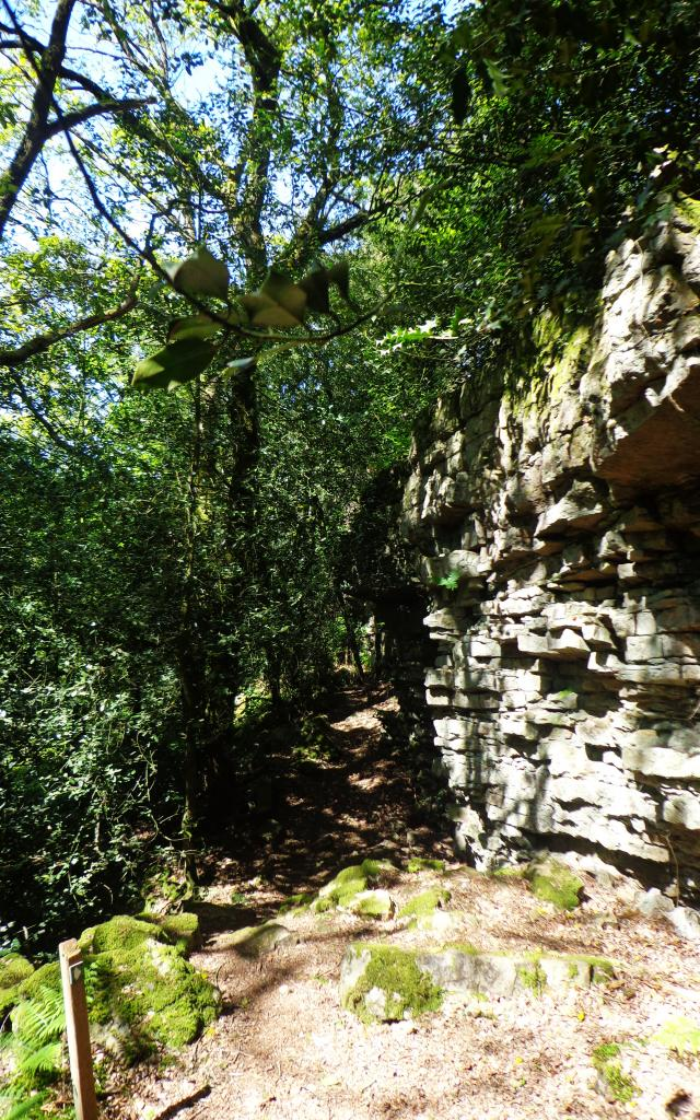 foret-andaines-gorges-villiers-2
