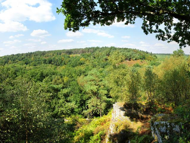 foret-andaines-gorges-villiers