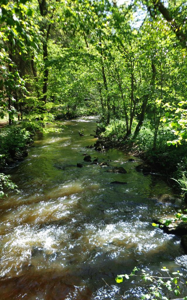 foret-andaines-gorges-villiers-riviere