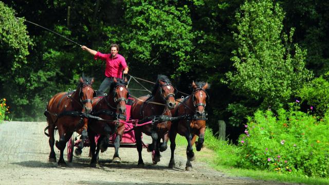 Juvigny Val Dandaine Michaudiere Ferme Cheval Trait Spectacle Equestre Bocage Normand