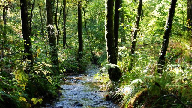 Bagnoles Orne Riviere Ruisseau Eau Vee Peche Poisson Foret Nature