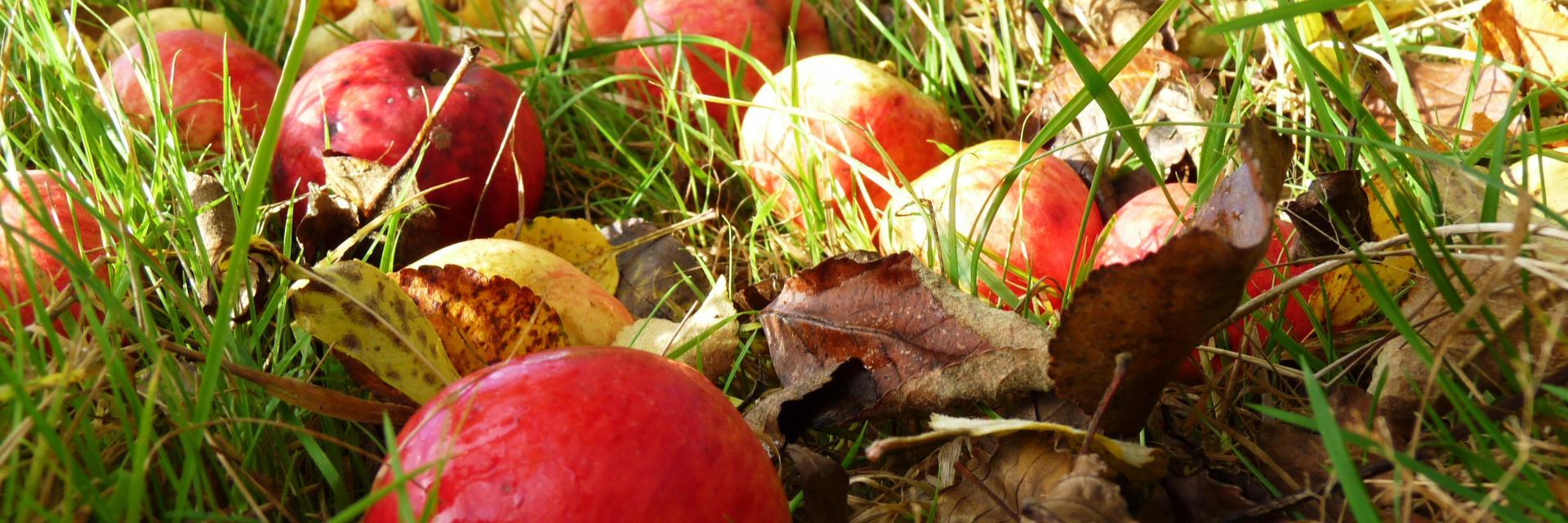 Bagnoles Orne Pom Producteur Cidre Terroir Pomme Jus Savoir Faire