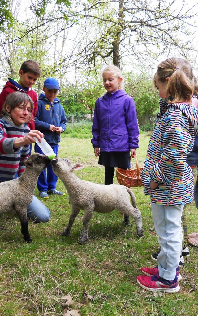 Bagnoles Orne Pom Producteur Cidre Terroir Pomme Jus Savoir Faire Visite Ferme Mouton