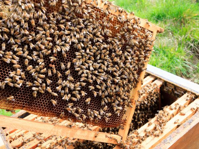 Open hive detail. Beekeeping, agriculture, rural life.