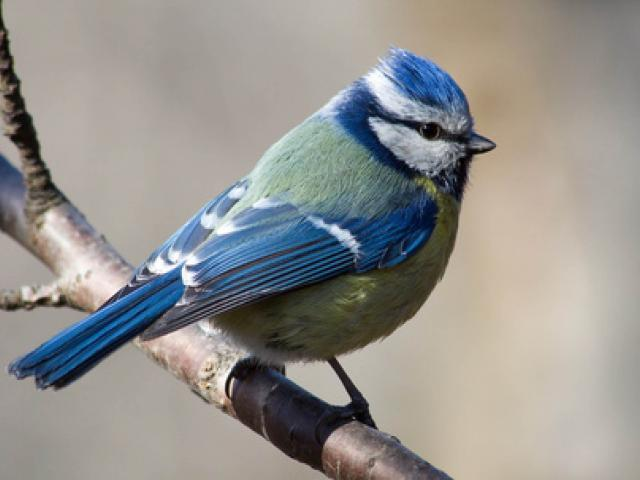 oiseau-bleu-nature-bird-blue-wild-animal-forêt-faune