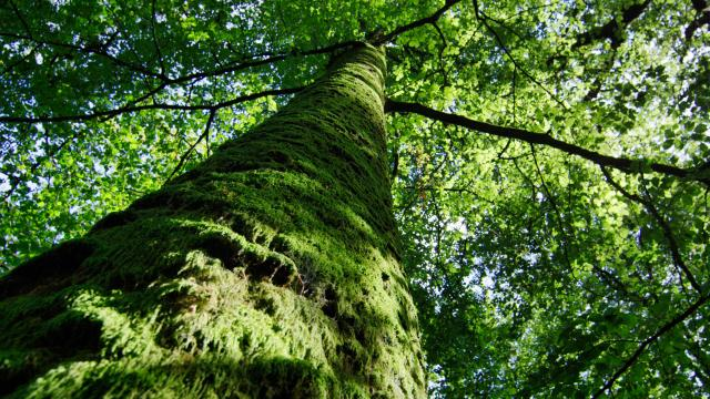 Bagnoles Orne Foret Andaines Arbre Remarquable Nature