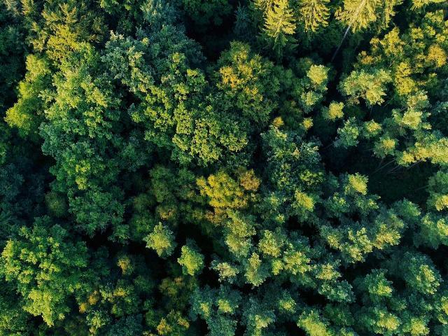 Bagnoles Orne Foret Andaines Nature Arbre Vue Ciel