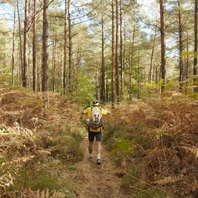 Bagnoles Orne Normandie Trail Course Coureur Traileur Ultra Jour 5