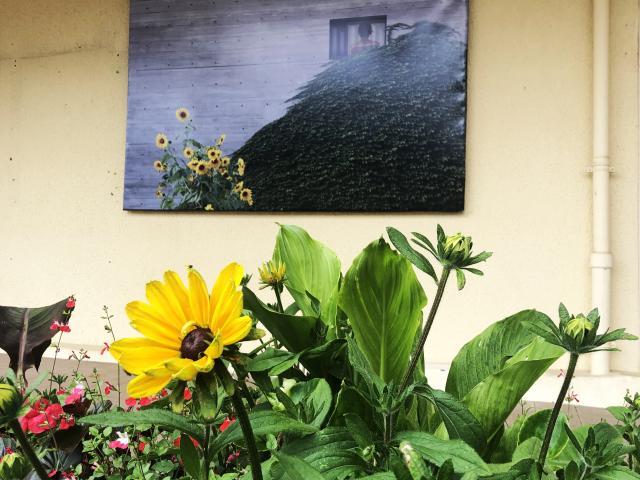 Bagnoles Orne Benoit Delomez Exposition Estivale Orne Contemporain Oeuvre Fleurs