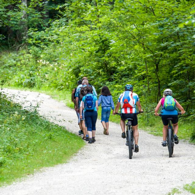 Bagnoles Orne Randonne Marche Velo Balade Groupe Nature Foret Itineraire Circuit Adobestock