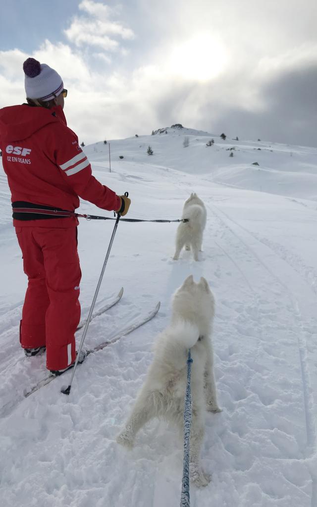Mushing en ski nordique