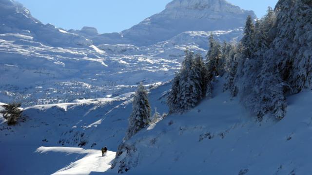 Randonneurs en raquettes de neige sur un sentier à Issarbe
