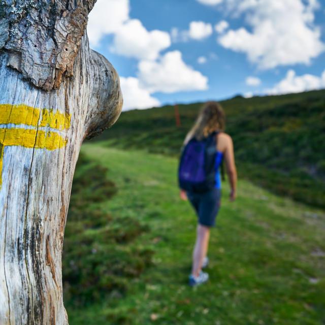 randonneuse passant à côté d'une signalétique directionnelle sur un arbre