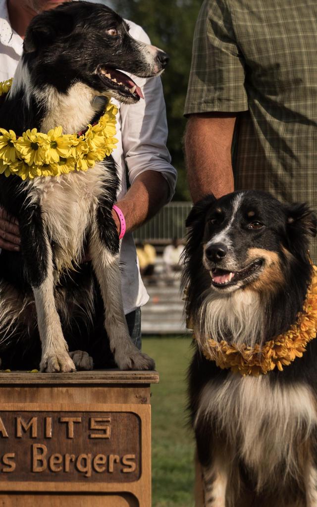 Remise des prix de chiens de bergers à la Fête des Bergers d'Aramits
