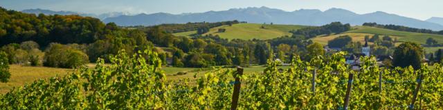 Vue sur les vignobles de Jurançon avec les Pyrénées en fond