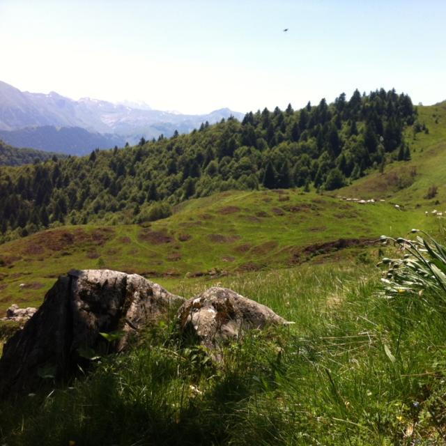 Paysage : vaches et forêt